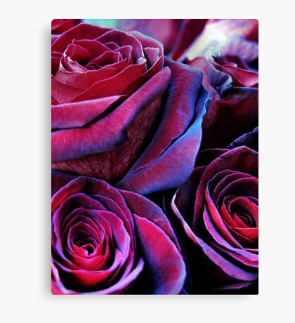 Last red rose Canvas Print