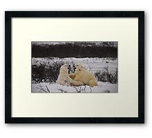 Just a couple polars telling jokes Framed Print