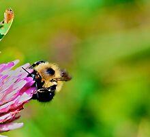 Bumblebee by Lac La Biche by LAaustin