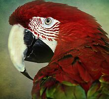 Polly Is Pretty....Now Where Is My Cracker by Barbara Zuzevich