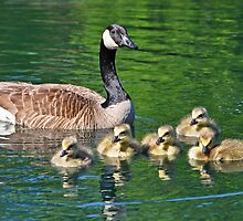 Mother and Chicks by BrianDawson