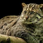 Fishing Cat by Mark Hughes