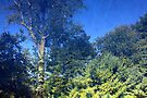 "Summertime-  Backyard Reflection by Christine ""Xine"" Segalas"
