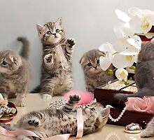 Scottish Fold kittens by Evgeniy Lankin