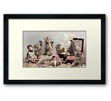 Scottish Fold kittens Framed Print