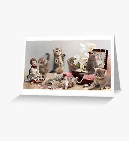 Scottish Fold kittens Greeting Card