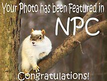 Feature Banner - NPC by Marcia Rubin