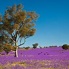 Purple paddock... by John Vandeven