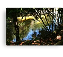 Stream Reflection in Parque Aiken del Sur Canvas Print