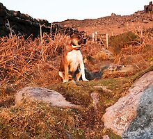 Megan on Curbar Edge Derbyshire at Sunset by Elaine123