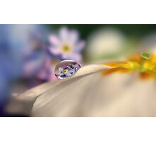 Forget-me-not tears Photographic Print