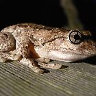frog by Floralynne