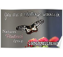 Butterfly Challenge Winner Poster