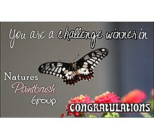 Butterfly Challenge Winner Photographic Print