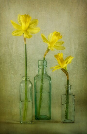 The Daf family by Mandy Disher