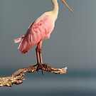 Statuesque in Pink by Phillip  Simmons