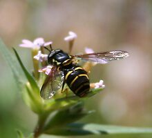 Well I'll Bee by Laura Davis