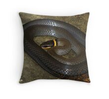 All Coiled Up (Ringneck Snake) Throw Pillow