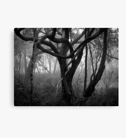 Scary Tree- Central Track, Morialta Canvas Print
