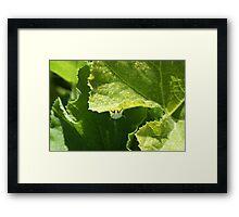 Peek-a-boo Moth Framed Print