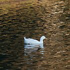 One White Duck by jae1235