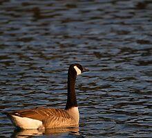 Goose 2 by jae1235