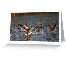 Geese taking flight 1 Greeting Card