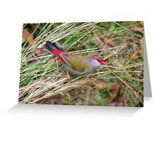 Red-browed Finch (Neochmia temporalis) Greeting Card