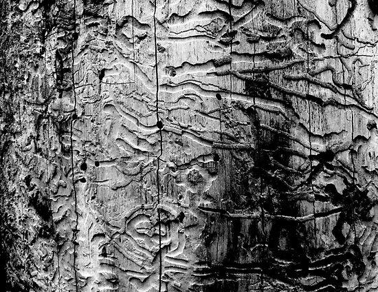 Wormwood by Margaret Bryant