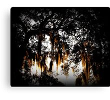 A Spanish Moss Sunrise Canvas Print