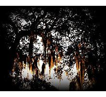 A Spanish Moss Sunrise Photographic Print