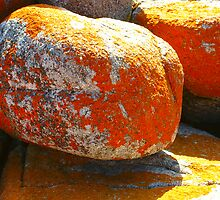 Mighty Lichen covered Rocks by waxyfrog