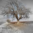 To Be Or Not To Be A Tree In Texas by Sherryll  Johnson