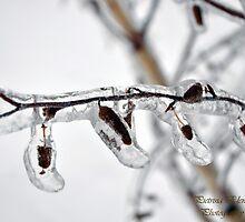 Frozen Catkin by Pietrina Elena Photography