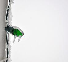 Green Light by Pietrina Elena Photography