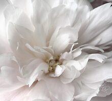 White Satin by tscp