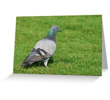 Pigeon in the grass Greeting Card
