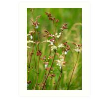 Meadow Rue Flowers Art Print