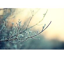 Cold Evening Photographic Print