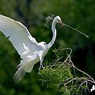 One More for the Nest by TJ Baccari Photography