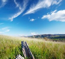 Wind blows across the meadow but some things stay the same.... by David Haviland