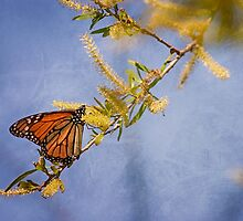 Monarch Blue Abstract by Capt. Charles McKelroy