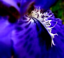 iris by pic4you
