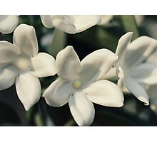 Glowing white flowers Photographic Print