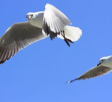 Seagulls in Hout Bay by MarkySA