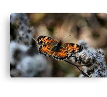 Pearl Crescent Canvas Print