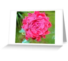 Red for roses Greeting Card