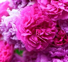 Pink Peonies by MagzParmenter