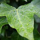 Rain on Ivy by MagzParmenter