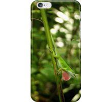 Carolina Anole iPhone Case/Skin